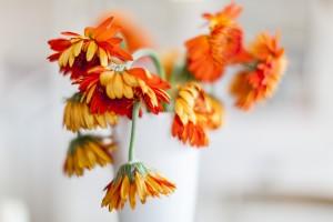 Fotograaf Utrecht_verlepte bloemen